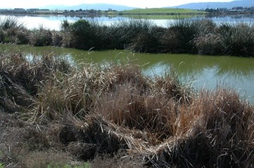 The wetlands in Sunnyvale where the trash was collected