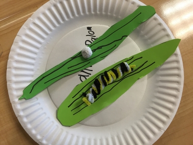 We started the session with gluing the caterpillar on one leaf and the egg on the other leaf with liquid glue.