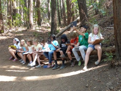 Day 3 - Sketching in the redwood forest