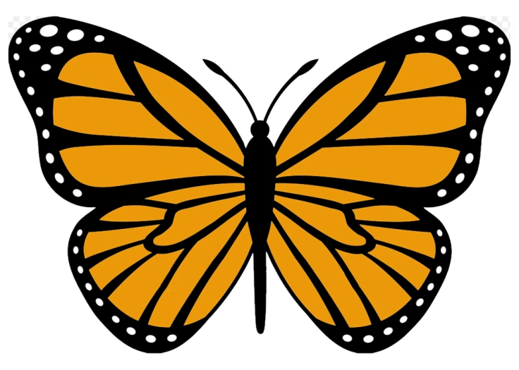 Here is a drawing of the caracteristic lines of a Monarch Butterfly's wings.