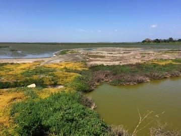 Plastic trash is hidden in the marshland along the San Francisco Bay