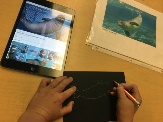 The students choose an endangered species and research about it, taking notes of the threat(s). Then they draw its shape from documentation.