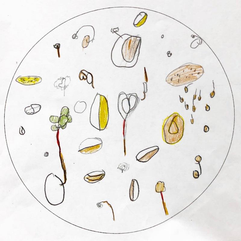 The Secret World of Pollination / Germination Observation