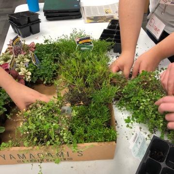 Adding a few small plants.